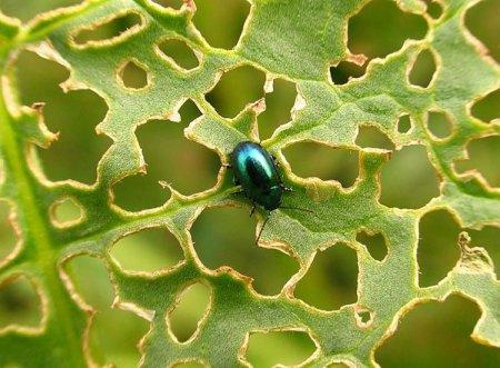 В Тюмене для борьбы с насекомыми-вредителями борются с помощью пест-контроля