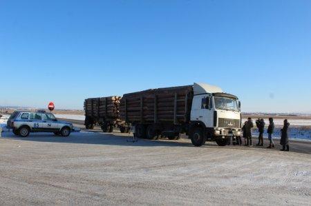 В ходе межведомственной операции «Лесовоз» выявлено 77 фактов незаконных рубок древесины