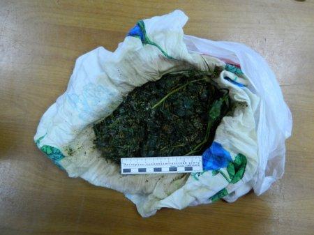 В Заларинском районе за хранение марихуаны к уголовной ответственности привлечён сборщик запрещённого дикороса
