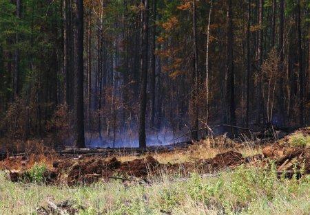 За минувшие сутки в Иркутской области ликвидировано восемь лесных пожаров