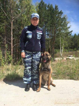 В Иркутске служебная овчарка «Уран» помогла полицейским обнаружить наркотики