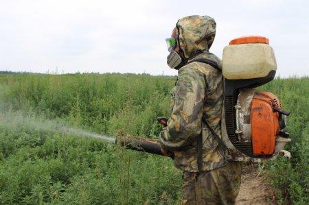 В Иркутском районе полицейские и администрация ликвидиовали очаги произрастания дикорастущей конопли
