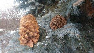 «Важная шишка» в зимнем саду главного здания Усадьбы В.П. Сукачёва - Иркутская область. Официальный портал
